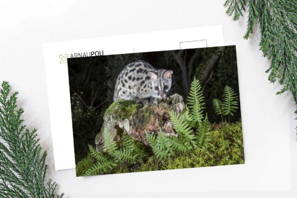 Col·lecció de postals de natura - Arnau Pou